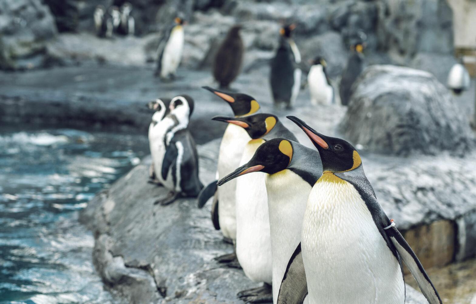 4-penguin-problem-business